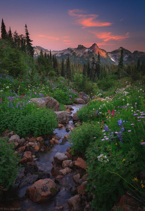 wildflowers in the mountains with a babbling brook - Mount Ranier National Park, WA