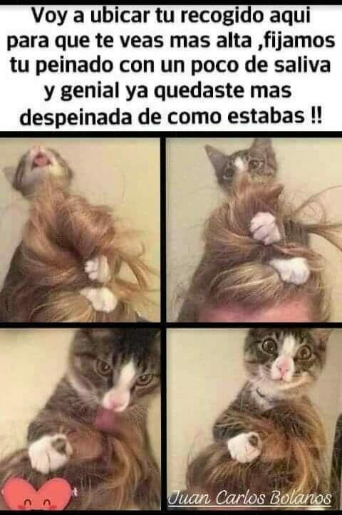 Pin De Maria Elena Rodriguez Blas En Funny Crazy Memes Divertidos Memes Graciosos Meme Gracioso