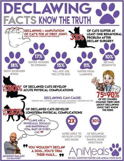 Declawing Facts Declawing Dontdeclaw Catsneedclaws Saved By