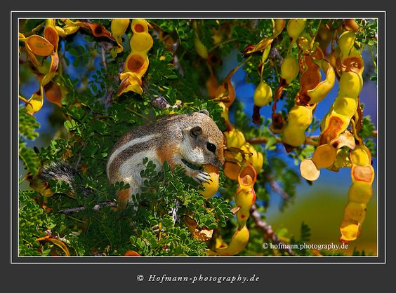 Ground Squirrel - Gary Hofmann