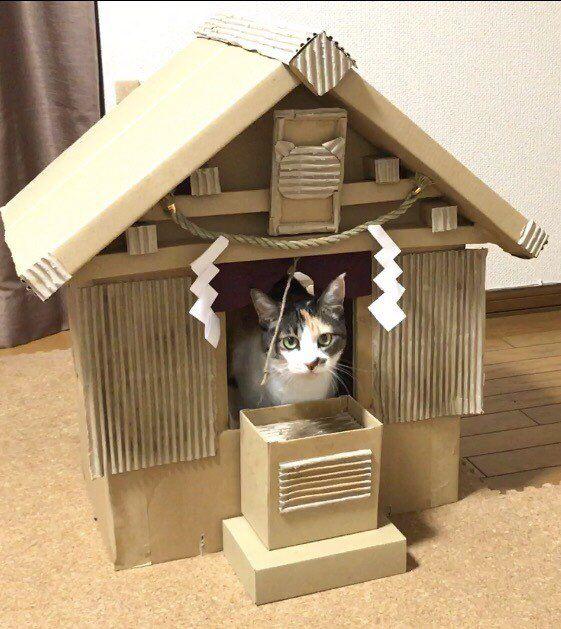 尚輝 尾張のうつけ者さんのツイート 母が作成していた ダンボール神社が完成しておりました 御神体は15歳三毛猫のようです ちなみにお賽銭も自分で回収するスタイルの御神体です Https T Co Jo2nsxx00k Calico Cat Cats And Kittens Cute Cats