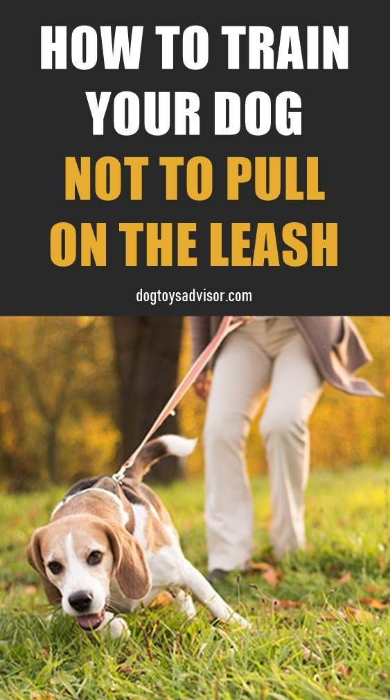 How To Train A Dog To Stop Pulling On The Leash How To Train A Dog