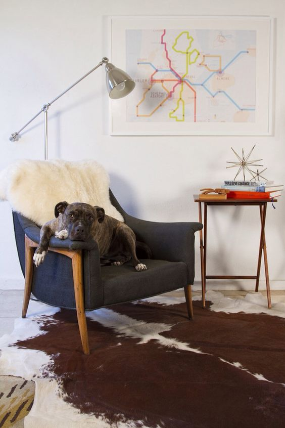 Dog in awesome living room