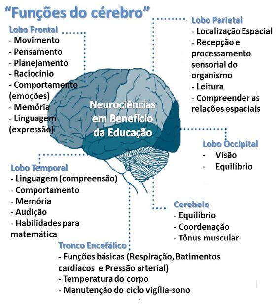 Funções do cérebro www.facebook.com/NeurocienciasEmBeneficioDaEducacao - Neurociência/ Neuroaprendizagem/ Neuroeducação/ Neuropsicologia/ Neurologia/ Neuropsicopedagogia/ Neurobiologia/ Neurofisiologia/ Neuróbica/ Psicologia/ Educação/ Desenvolvimento Pessoal: