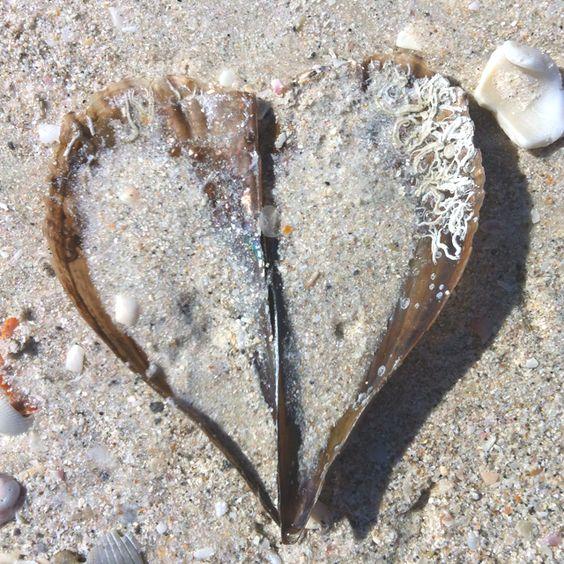 Shell Love: Hearts Things, Isee Hearts, Hearts Hearts Hearts, Beaches Seashells, Seashells Salty, Island Shells, Seashell Heart