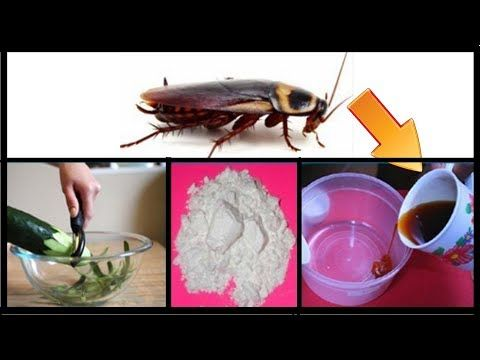 How To Get Rid Of Cockroaches Permanently And Fast In Kitchen Cabinets Natural Remedies Natural Remedies Health Home Remedies For Roaches Natural Remedies