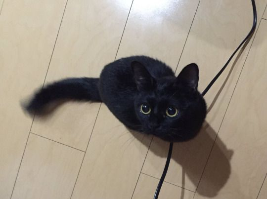 those big gorgeous eyes