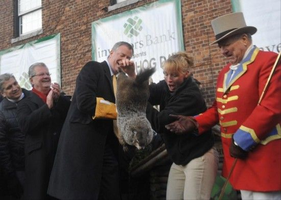 Groundhog killer de blasio wont be allowed to touch this years ground hog at the shadow  sighting ceremony In Feb. Last year he dropped the poor groundhog and it died shortly thereafter of internal injuries, the staten island zoo tried to cover it up, This year the ground hog will be secured in a plexiglass box to prevent the mayor from killing it.
