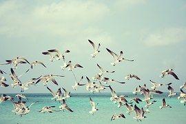 갈매기, 바닷가, 새, 새 들, 날개, 자연, 바다, 휴일, 여름