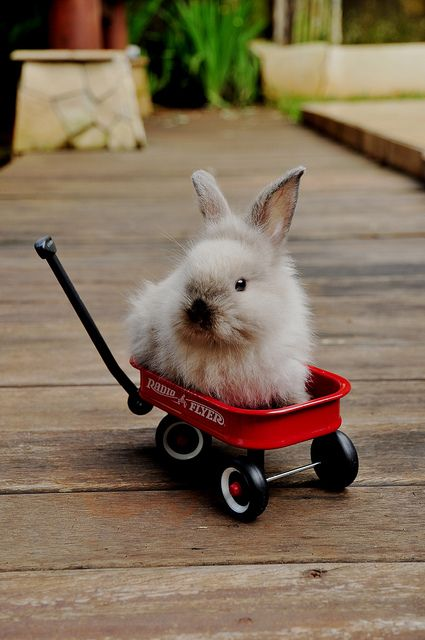 Isn't he just the cutest!! A tiny wagon for a tiny bunny. We love it!