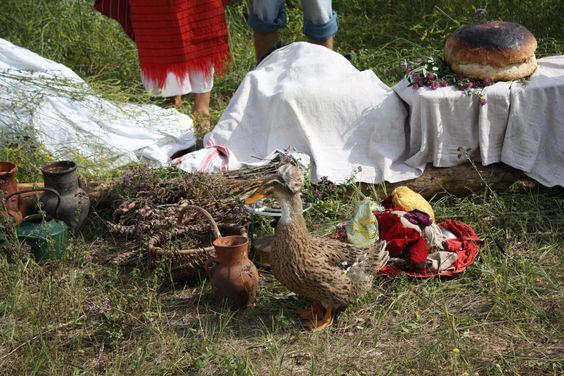 "Ukraine - the ducks have fuzzy ""hats"""