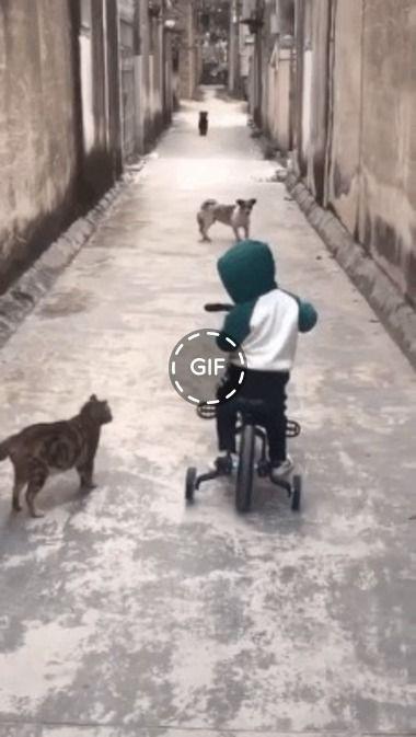 Cachorro tenta ataca, mas gato impede