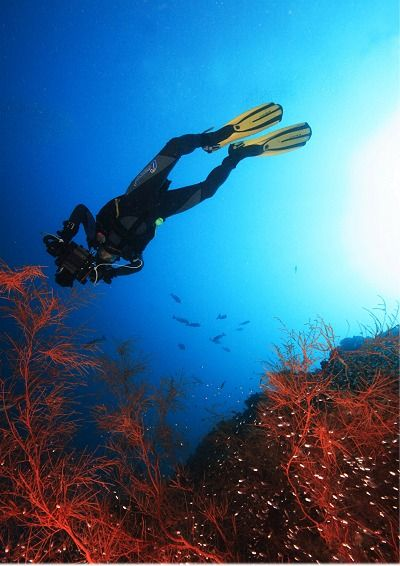 10 consejos para iniciarse (o mejorar) en fotografía submarina