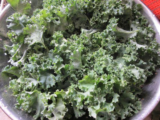 Marinated Kale Salad washed kale
