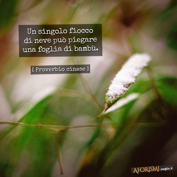 Un singolo fiocco di neve può piegare una foglia di bambù. (Proverbio cinese)