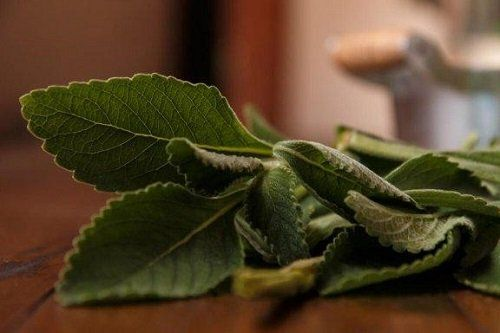 plante medicinale pentru tratamentul articulațiilor)