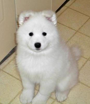 animal mignon petit chien - photo #1