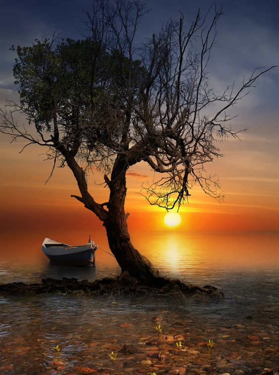 sea sunset boat nature beach light tree art seascape