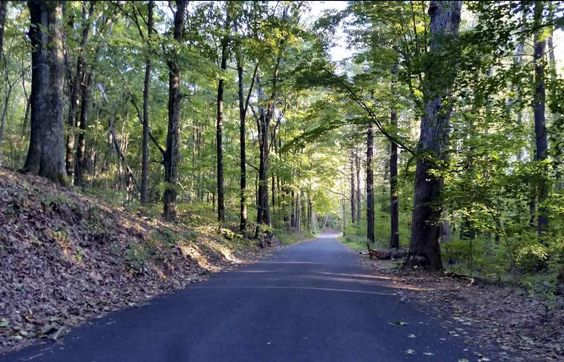 HAMDEN >> The pruning and removal of trees on Spruce Bank Road is on hold after several residents lodged objections with the town's tree warden over the plans to clean up the foliage.