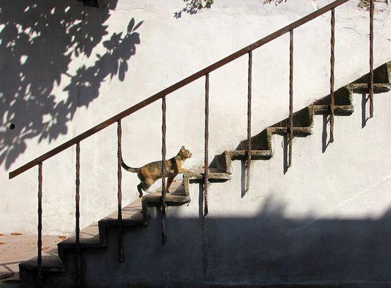 the obliging cat