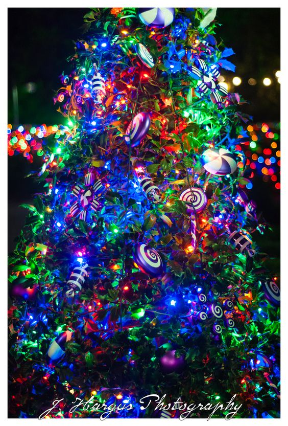 Colorful tree at Busch Gardens in Tampa Florida.
