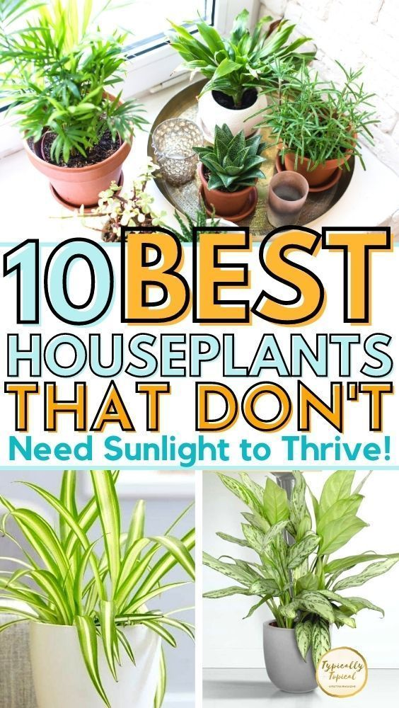 10 Of The Best Indoor Plants That Don T Need Sunlight Typically Topical In 2020 Plants Best Indoor Plants House Plants Indoor