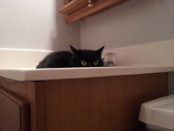 This is Zombie-Cat, and this is what she does every time I poop.
