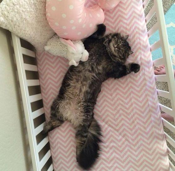 Gato deitou de barriga para cima ao entrar em berço construído para bebê prestes a nascer (Foto: Max Brown/imgur.com)