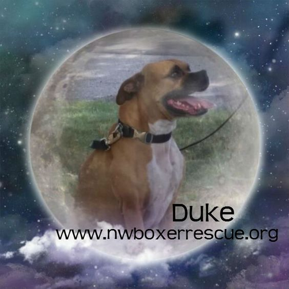 Duke2 is home for the holidays!  Congrats!!