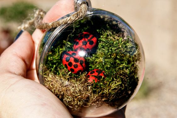 Local parks terrarium and branches on pinterest - Great christmas ornaments that you need for your home ...
