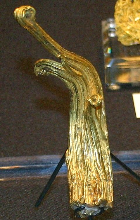 Rare and highly valuable ram's horn gold nugget formation. Of the few specimens of this type mined in the US, most come from a single location at Gilman, Colorado.