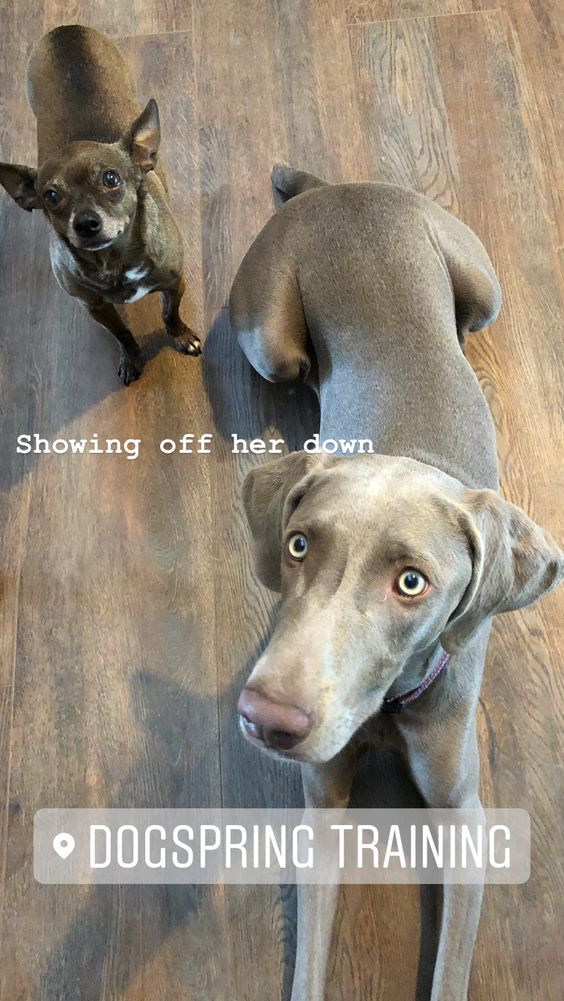 Pin By Dogspring Training On Instagram Instagram Dog Training