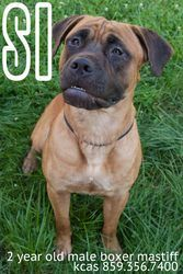 Si is an adoptable Boxer Dog in Fort Mitchell, KY.     For more information, please call the shelter at 859-356-7400 or better yet, visit the shelter in person.  Adoption Center hours are Mon, Tues, T..