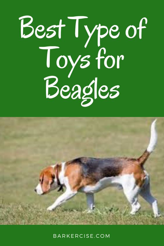 The Best Type Of Dog Toys For Beagles What Toys Do Beagles Like
