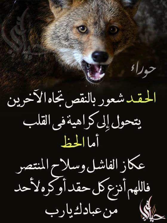 Pin By فلسطينية ولي الفخر On روائع الحكم Movie Posters Poster Qoutes