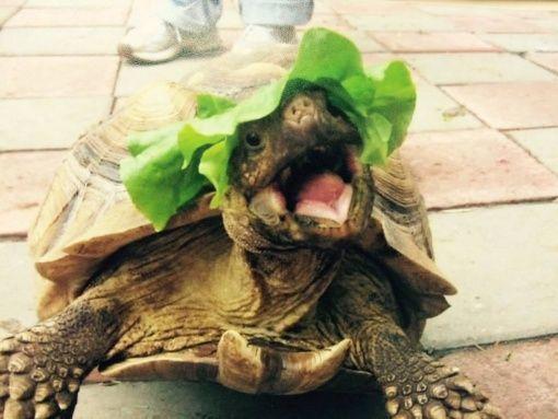 Loves his little lettuce hat