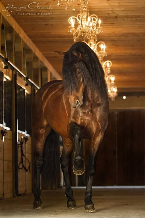 Who's barn has chandeliers?: