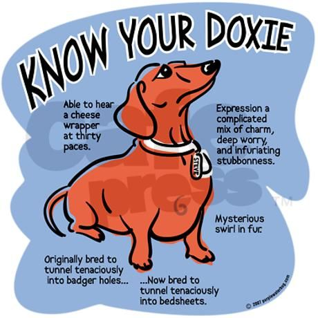 Know your doxie. :)