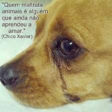 FRASE DE CHICO XAVIER