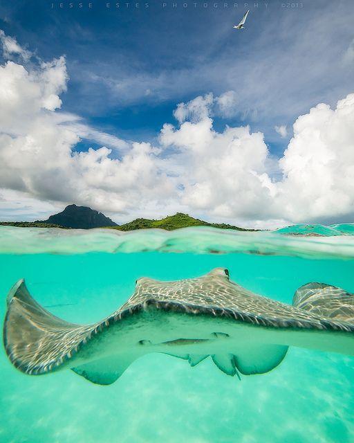 ~~Stingray - French Polynesia by Jesse Estes~~                              …