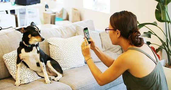 Mejores apps para mascotas