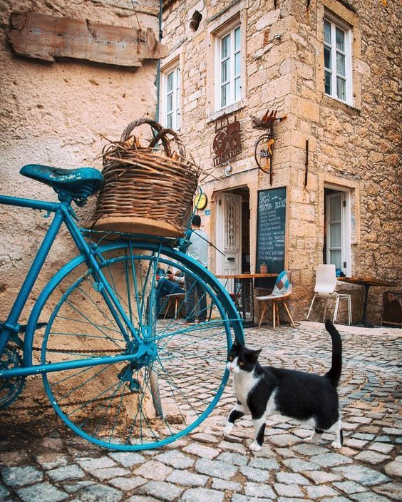 Go For A Ride Day Check Out 5 Videos Of Cats Biking Around Cattime Crazy Cats Beautiful Cats Cats
