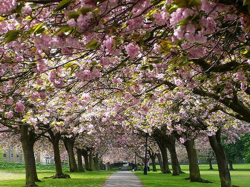 The Stray, Harrogate, England. The Flower town of Great Britain. Home of the famous Betty's Café and Tea Rooms.