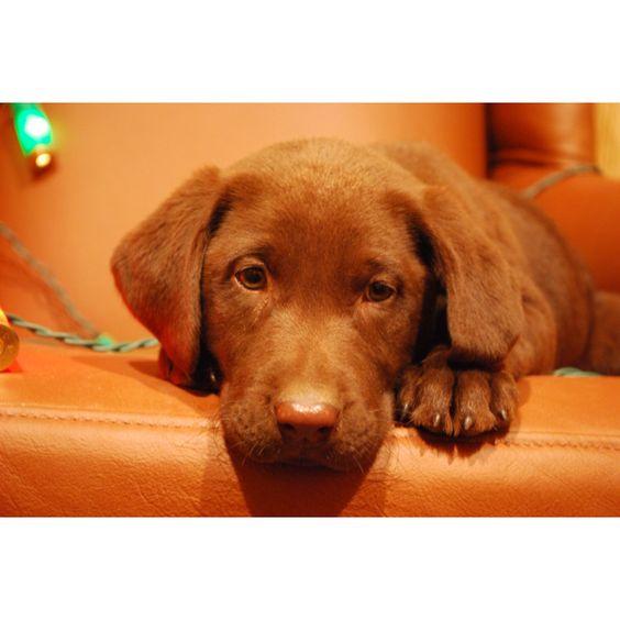 RoddyDog pup www.blowingsprings.com