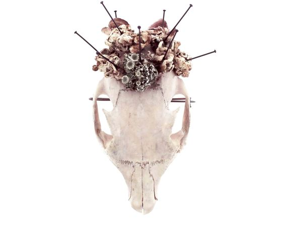 Luci Jockel, Royal Mourning, 2014, brooch; squirrel skull, lichen, fungi, insect pins, steel; Rhode Island School of Design (RSID), Providence, US - Marzee .... 2016-