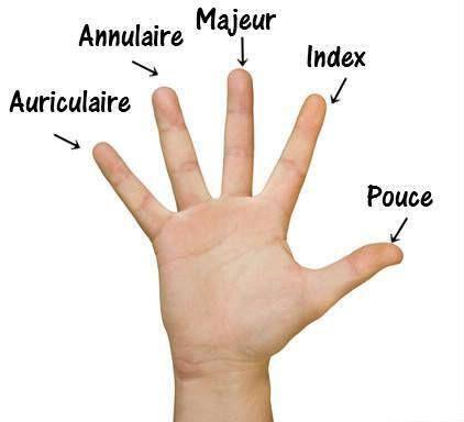 La chanson pour apprendre les noms des doigts : « J'ai un petit pouce, aussi un index. Un majeur, un annulaire, un petit auriculaire. En tout j'ai 10 doigts! »: