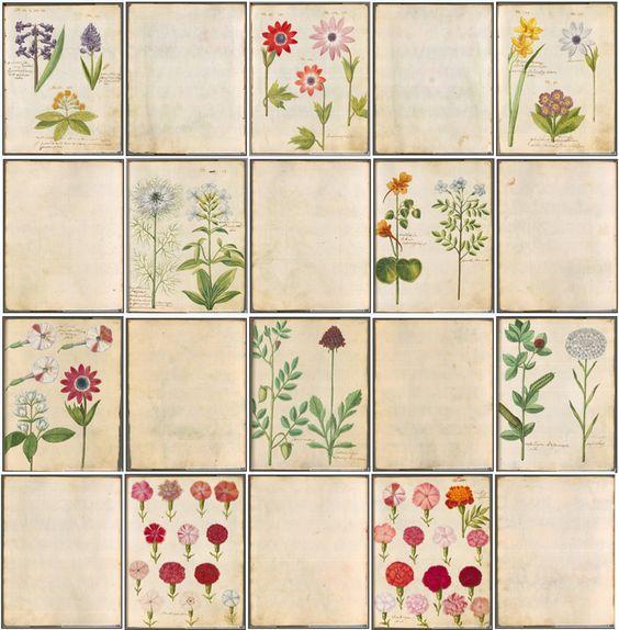 fuckyeahbookarts:              artspotting:              > hortulus monheimensis Süddeutschland, 1615 in der Bayrischen Staatsbibliothek - Digitale Sammlung