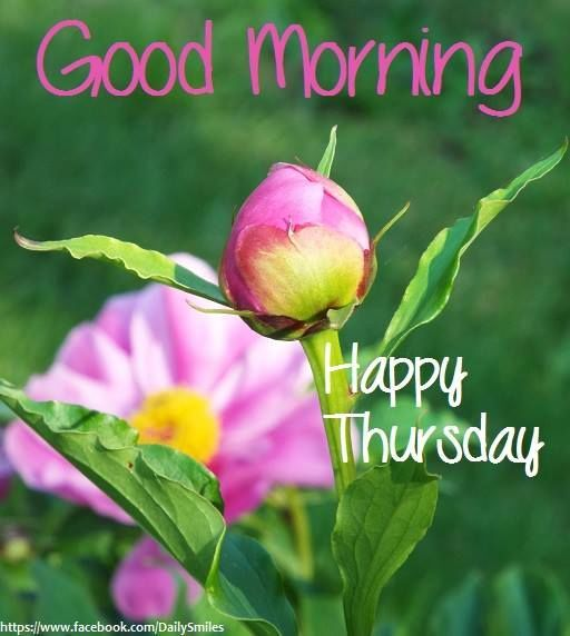 Good Morning Its Thursday | Good Morning Happy Thursday ...
