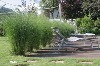 gräser sichtschutz | terrasse und gartengestaltung | pinterest, Gartenarbeit ideen