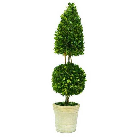 """Preserved Boxwood Topiary Mixed 36"""""""